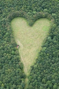 heart-shaped-meadow