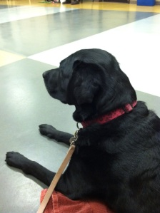 Tahn at her first (second round) of Puppy Class